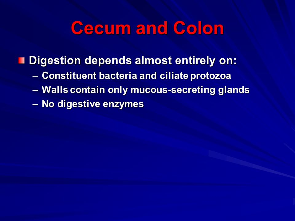 Cecum and Colon Digestion depends almost entirely on: