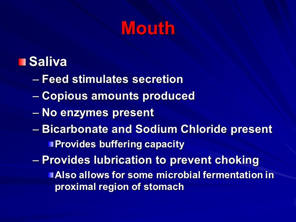Mouth Saliva Feed stimulates secretion Copious amounts produced
