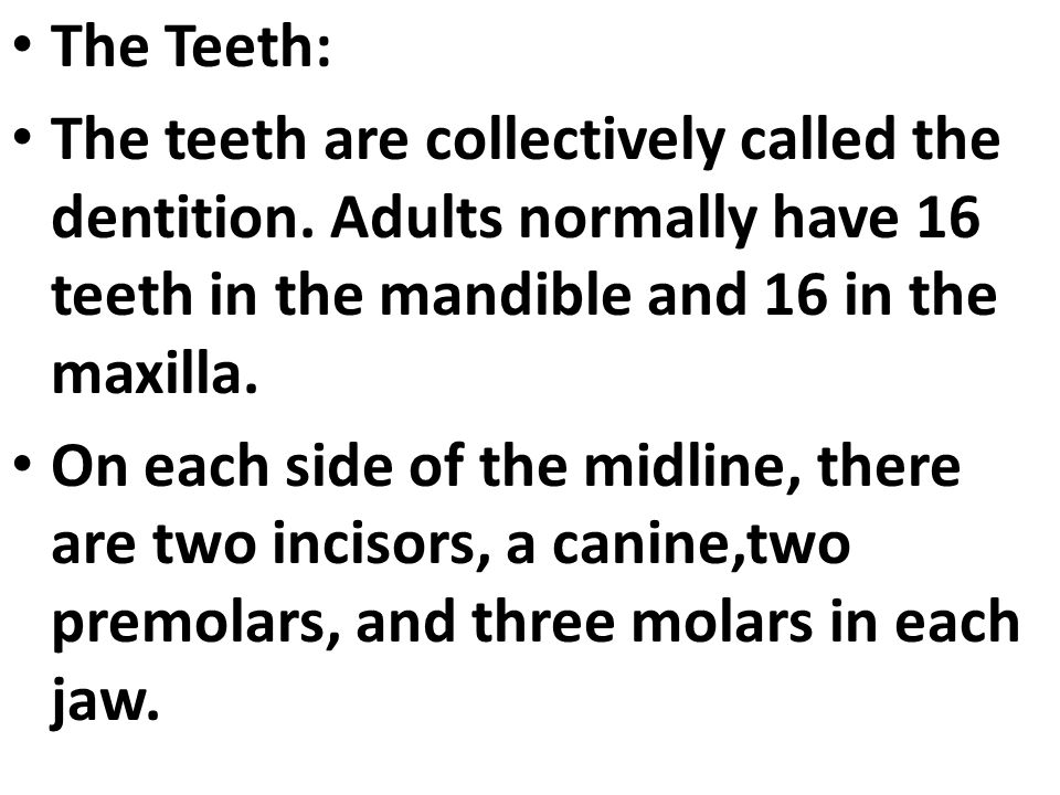 The Teeth: The teeth are collectively called the dentition. Adults normally have 16 teeth in the mandible and 16 in the maxilla.