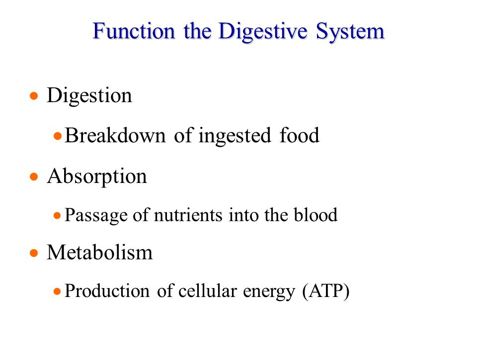 Function the Digestive System