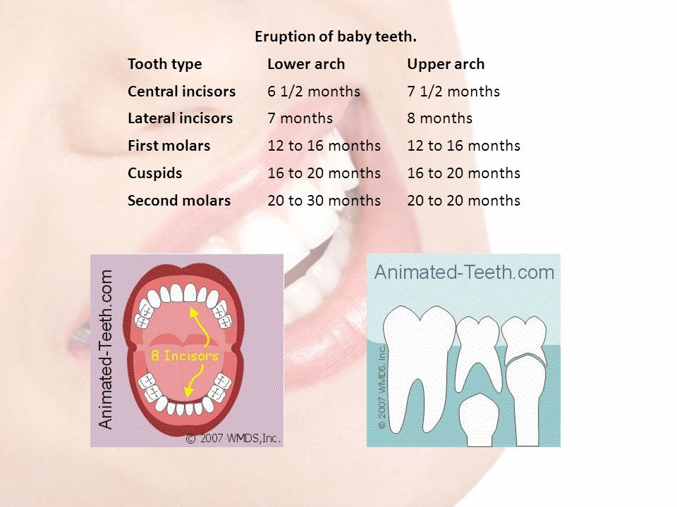 Eruption of baby teeth. Tooth type. Lower arch. Upper arch. Central incisors. 6 1/2 months. 7 1/2 months.