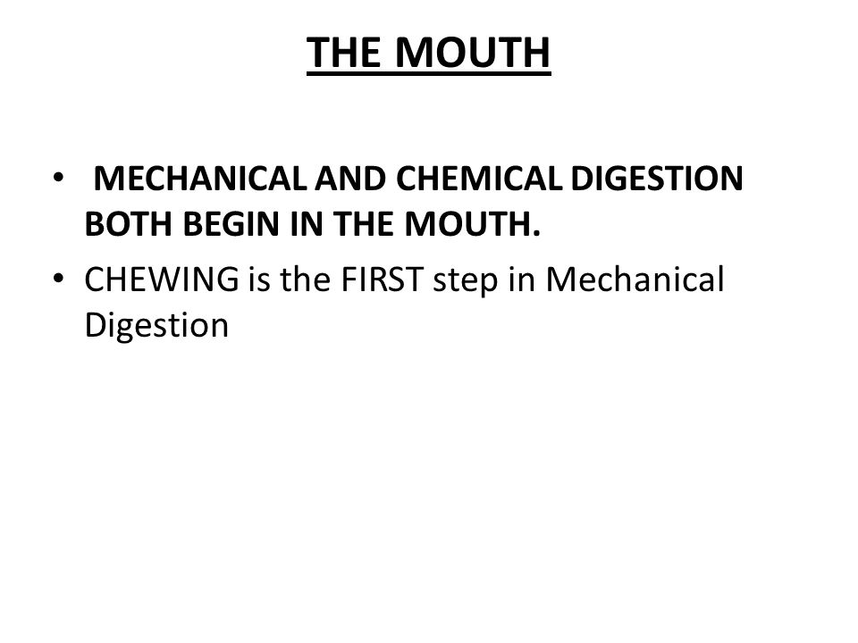 THE MOUTH MECHANICAL AND CHEMICAL DIGESTION BOTH BEGIN IN THE MOUTH.