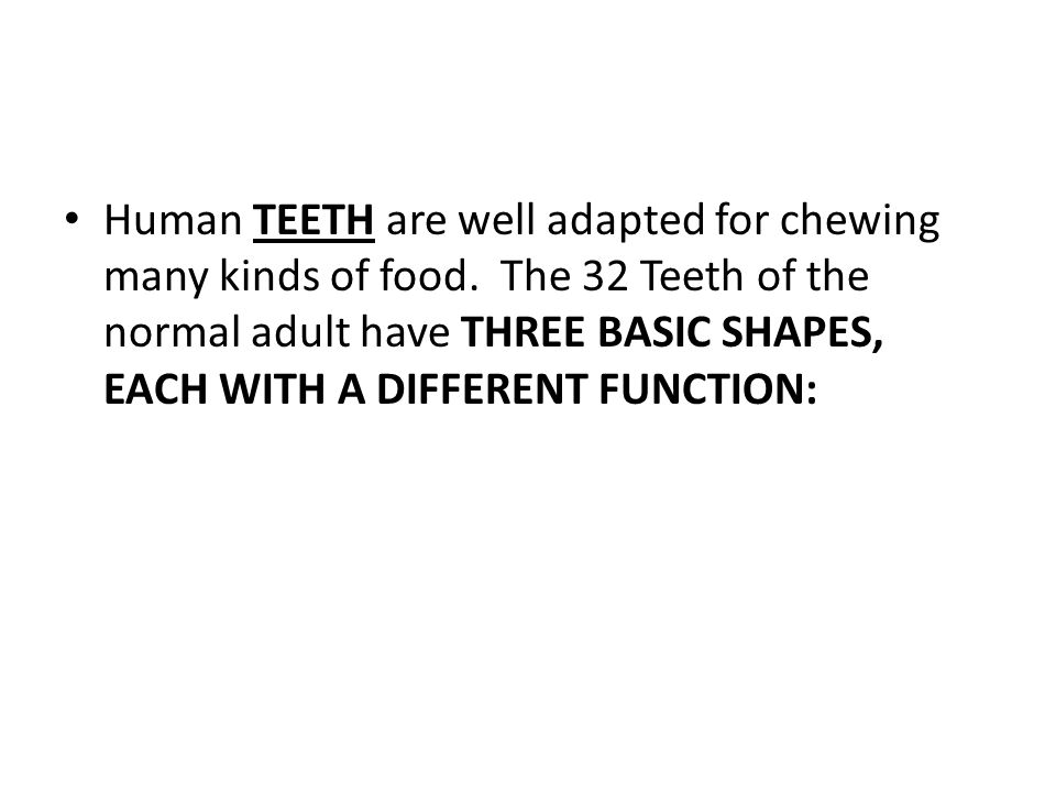 Human TEETH are well adapted for chewing many kinds of food