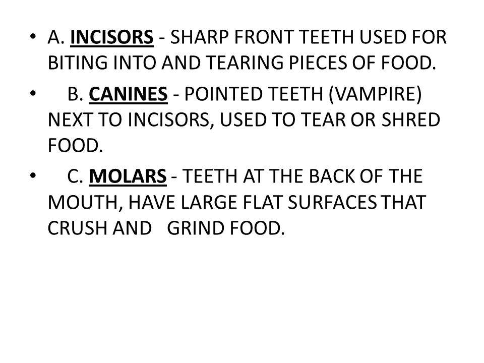 A. INCISORS - SHARP FRONT TEETH USED FOR BITING INTO AND TEARING PIECES OF FOOD.