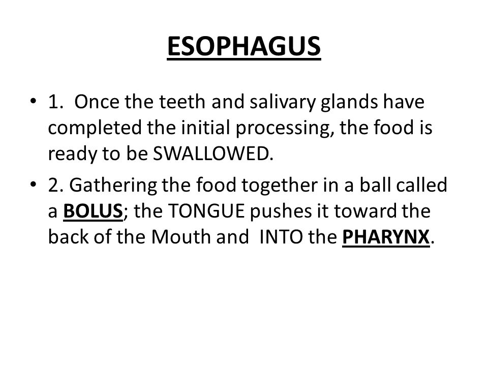 ESOPHAGUS 1. Once the teeth and salivary glands have completed the initial processing, the food is ready to be SWALLOWED.