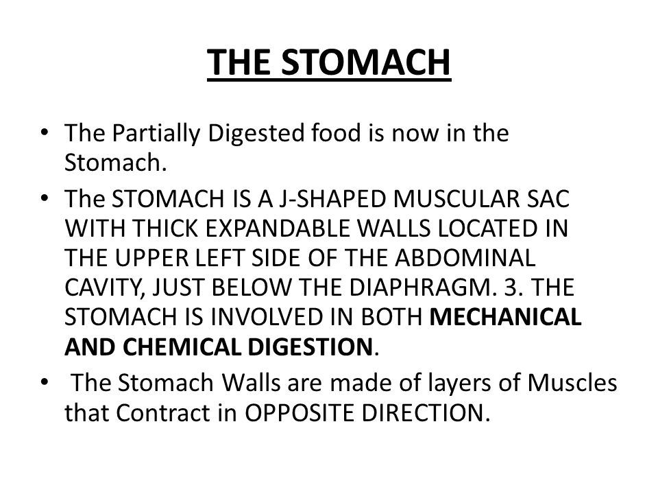 THE STOMACH The Partially Digested food is now in the Stomach.