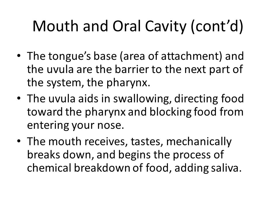 Mouth and Oral Cavity (cont'd)