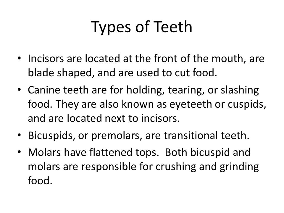 Types of Teeth Incisors are located at the front of the mouth, are blade shaped, and are used to cut food.