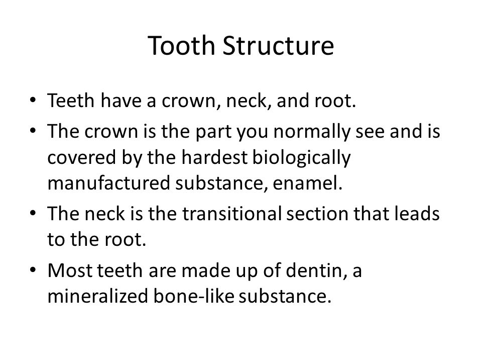 Tooth Structure Teeth have a crown, neck, and root.