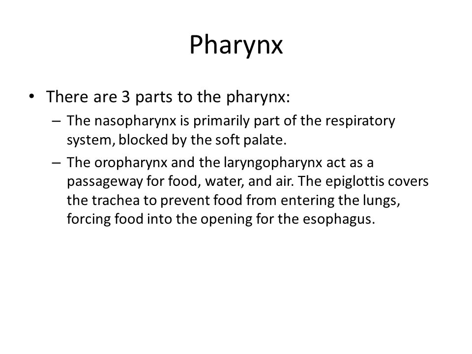 Pharynx There are 3 parts to the pharynx:
