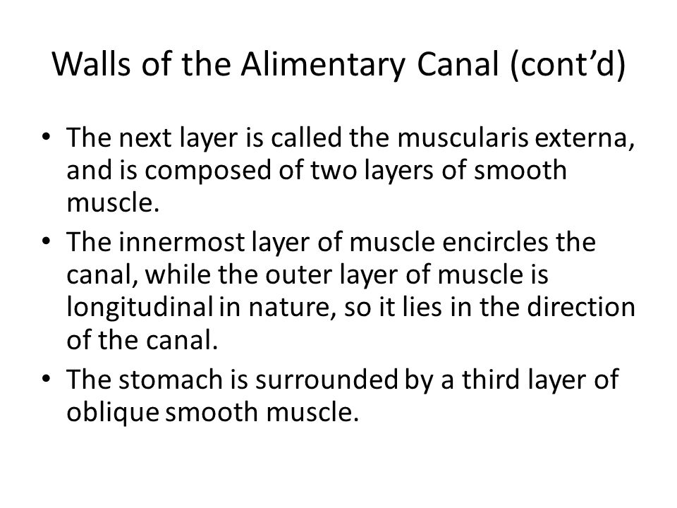 Walls of the Alimentary Canal (cont'd)