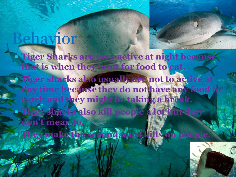 Behavior Tiger Sharks are very active at night because that is when they hunt for food to eat.