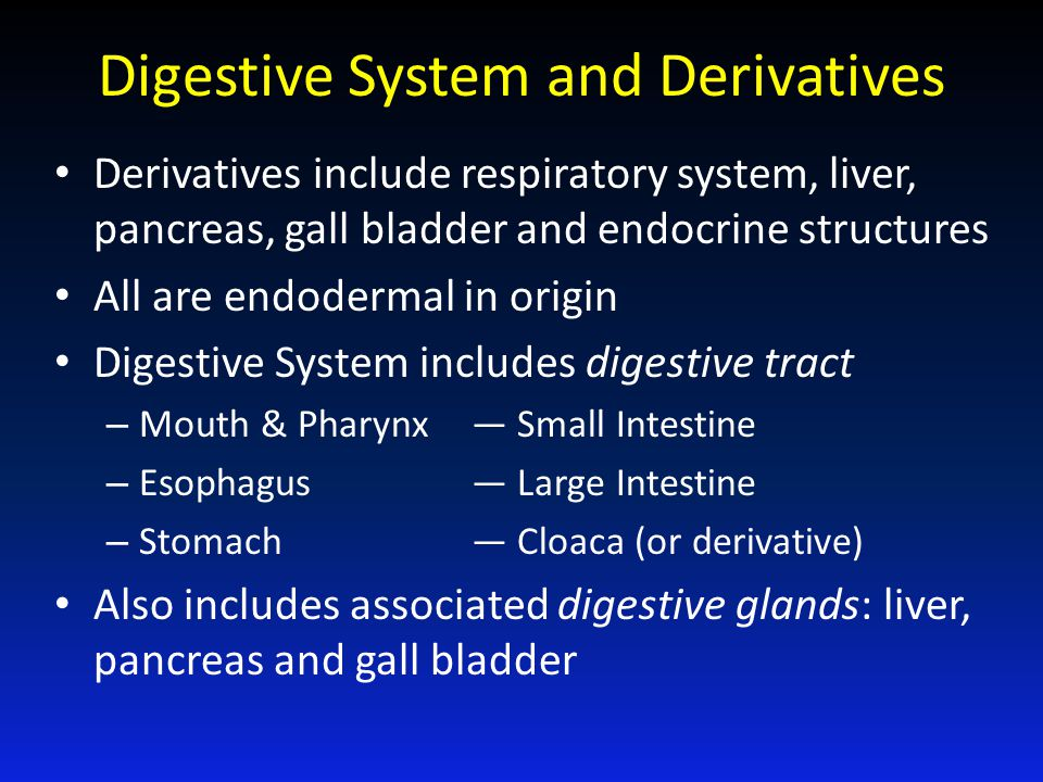 Digestive System and Derivatives