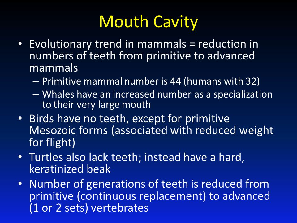 Mouth Cavity Evolutionary trend in mammals = reduction in numbers of teeth from primitive to advanced mammals.