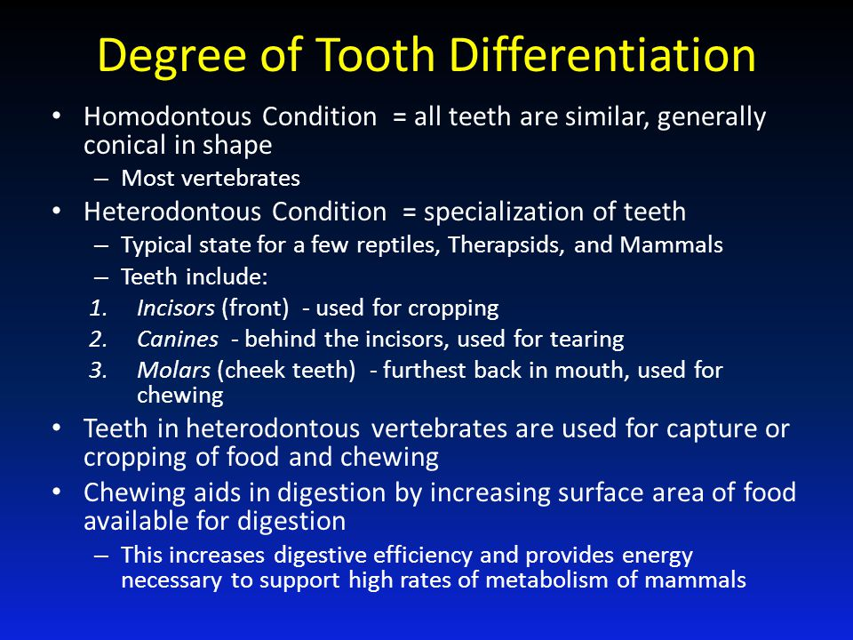 Degree of Tooth Differentiation