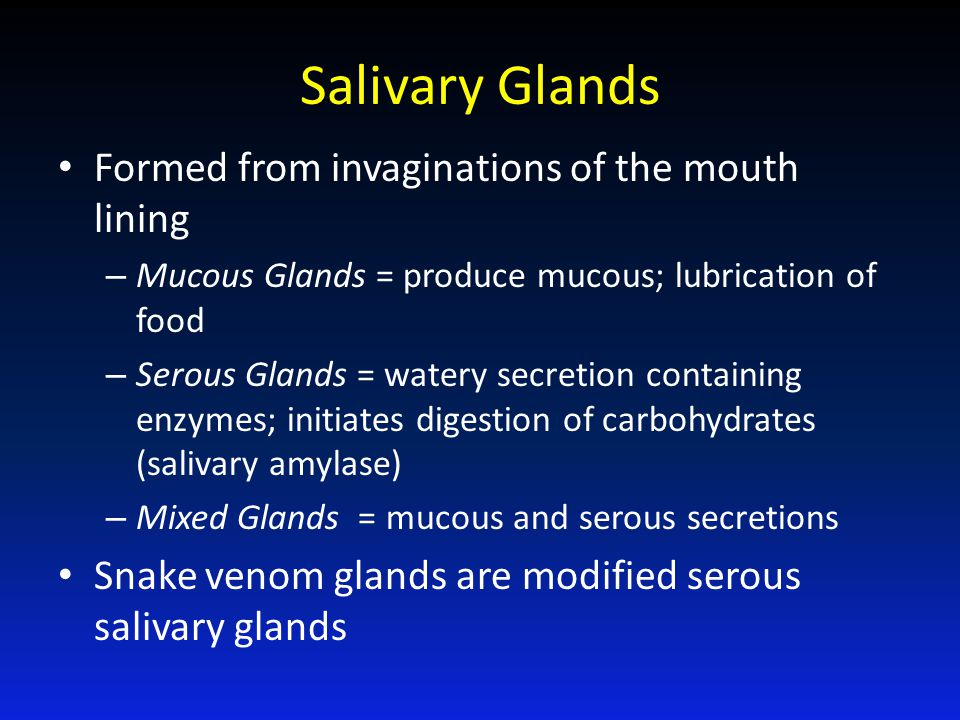 Salivary Glands Formed from invaginations of the mouth lining