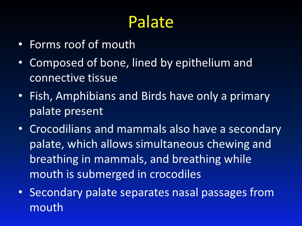 Palate Forms roof of mouth
