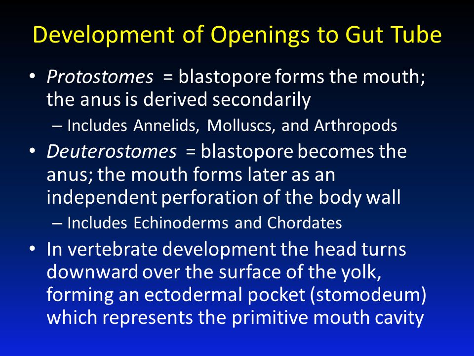 Development of Openings to Gut Tube