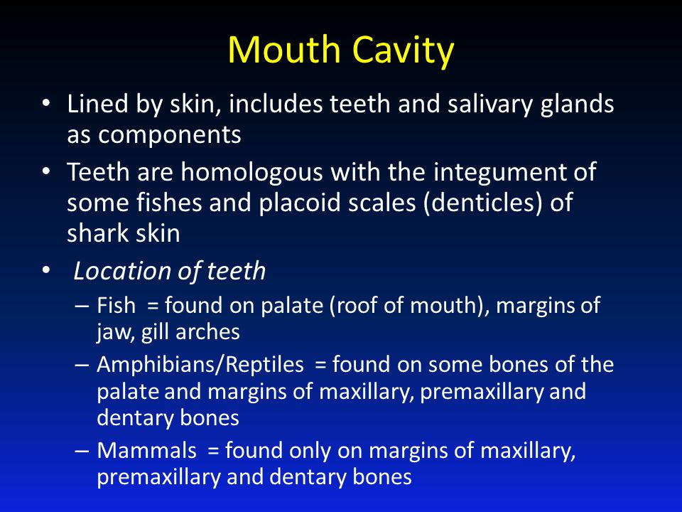 Mouth Cavity Lined by skin, includes teeth and salivary glands as components.