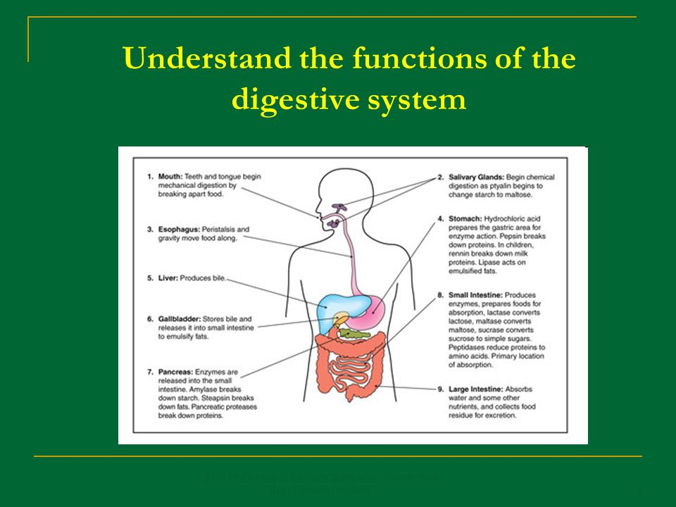 Understand the functions of the digestive system