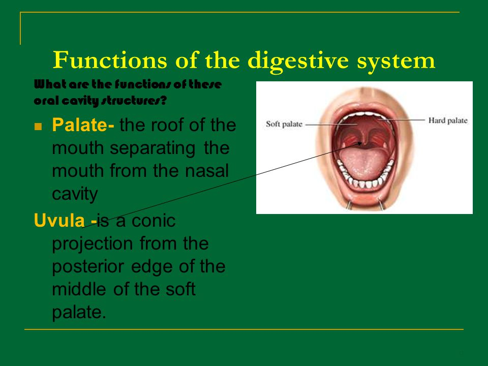 The Function Of The Mouth 32