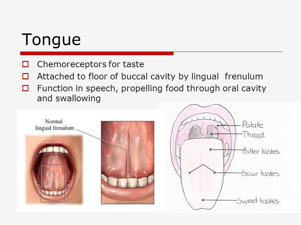 Tongue Chemoreceptors for taste
