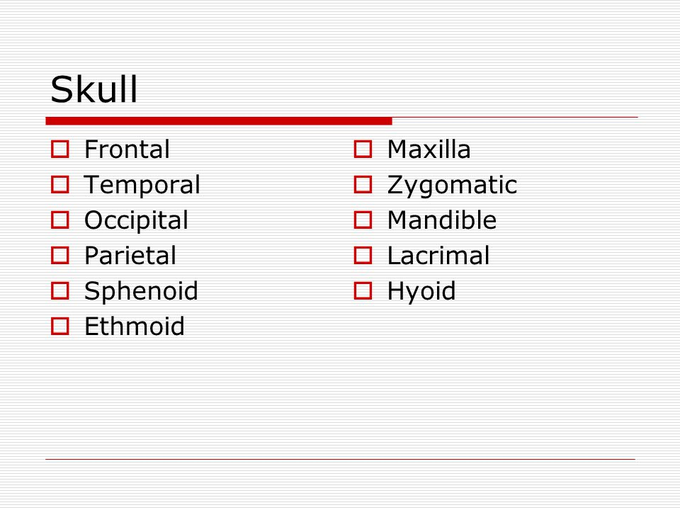 Skull Frontal Temporal Occipital Parietal Sphenoid Ethmoid Maxilla