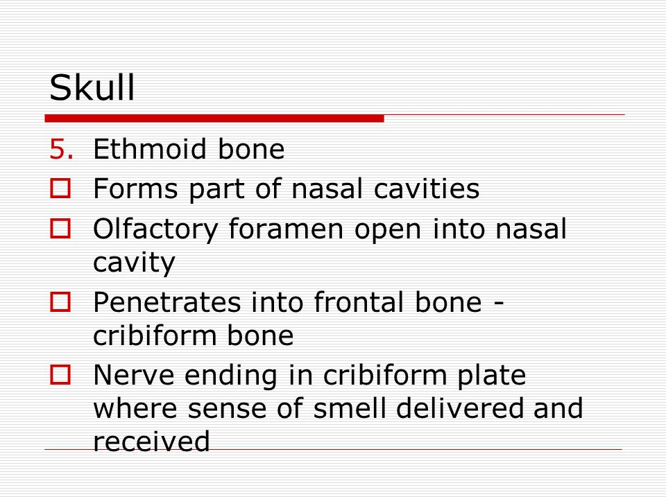 Skull Ethmoid bone Forms part of nasal cavities