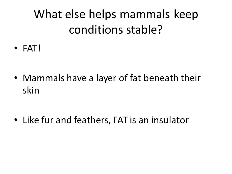 What else helps mammals keep conditions stable
