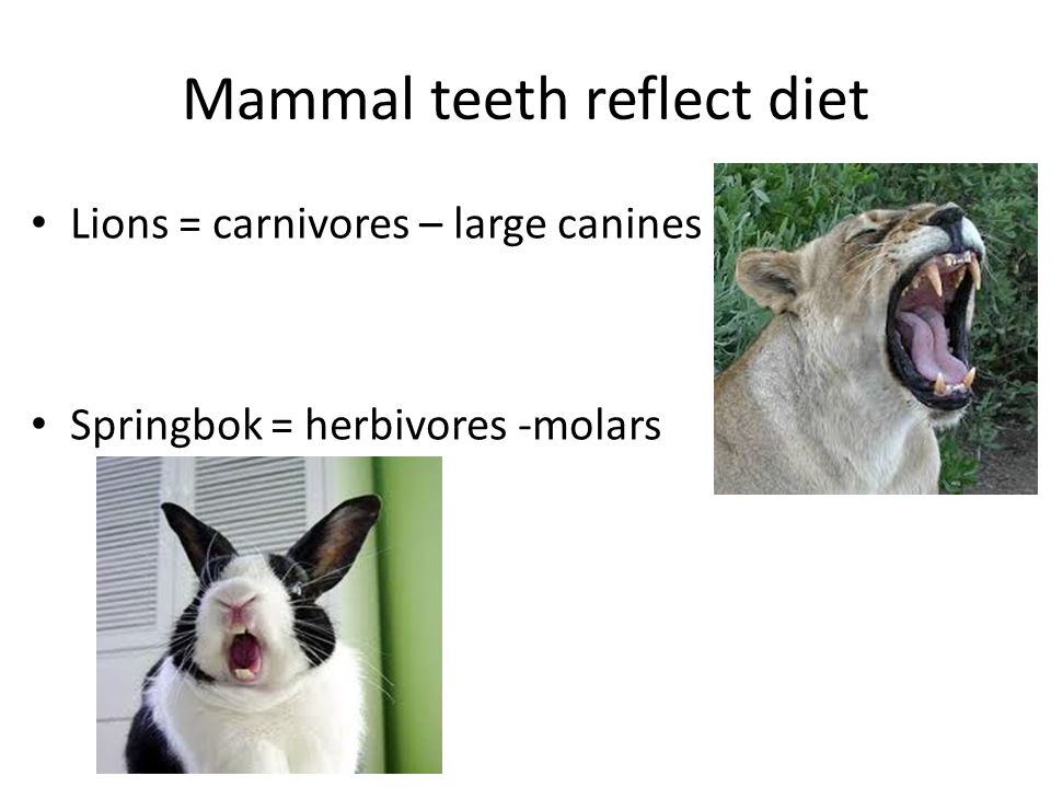 Mammal teeth reflect diet