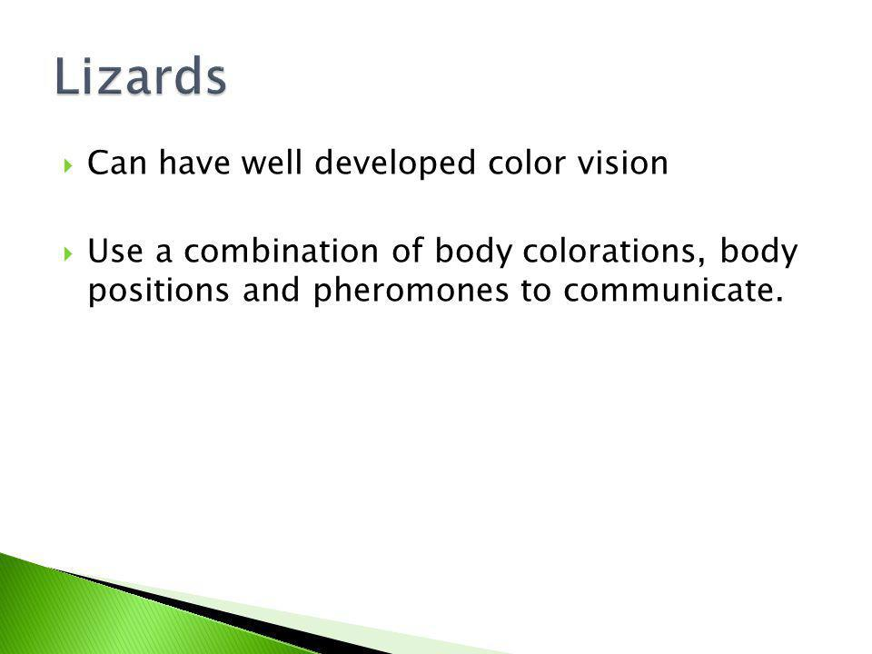 Lizards Can have well developed color vision