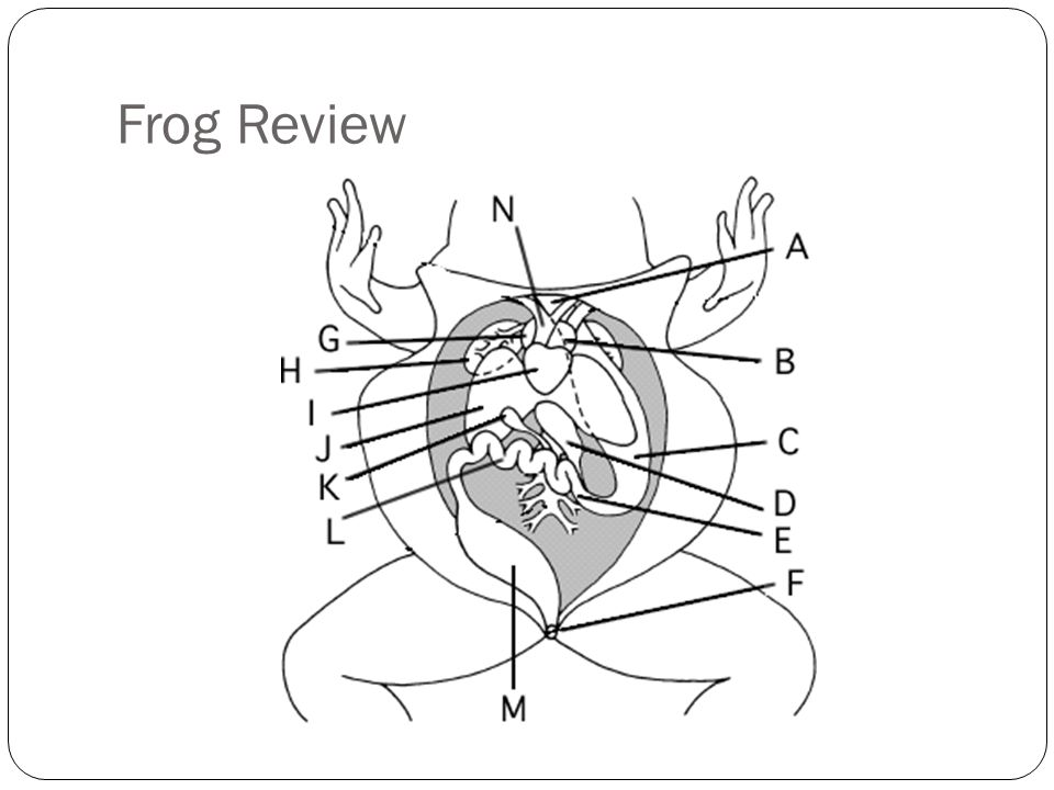 Frog Review