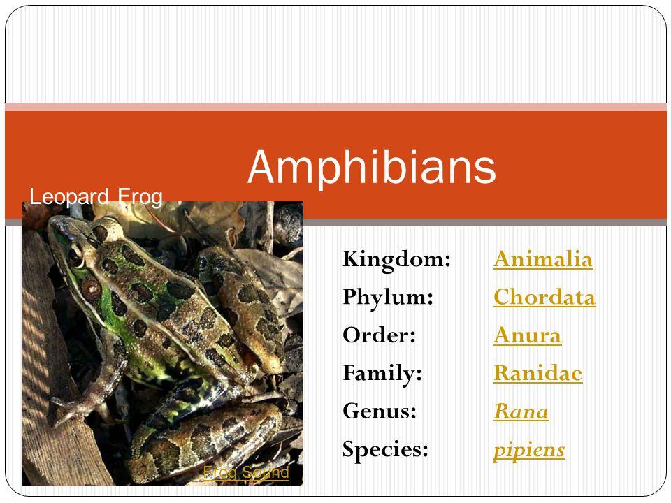 Amphibians Kingdom: Animalia Phylum: Chordata Order: Anura Family: