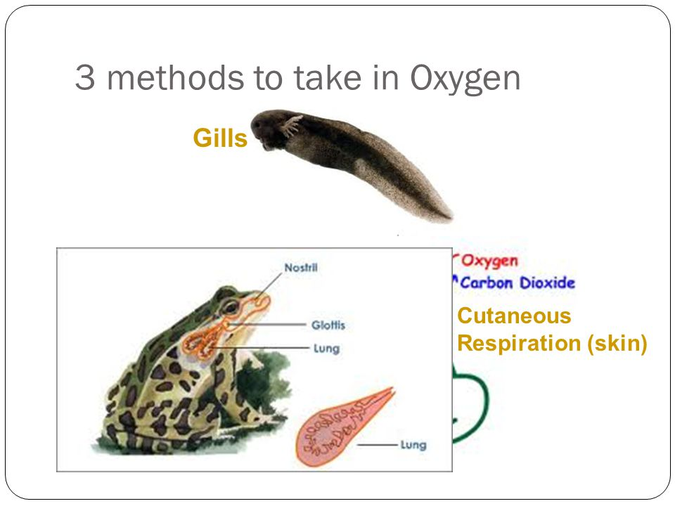 3 methods to take in Oxygen