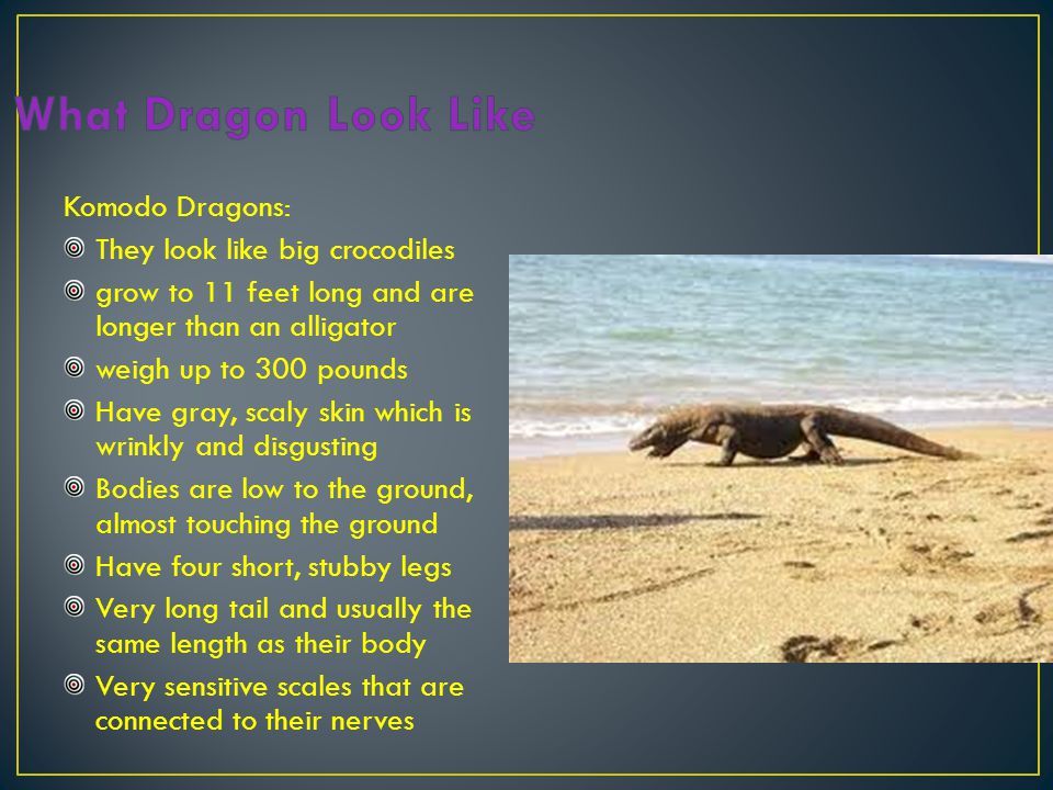 What Dragon Look Like Komodo Dragons: They look like big crocodiles