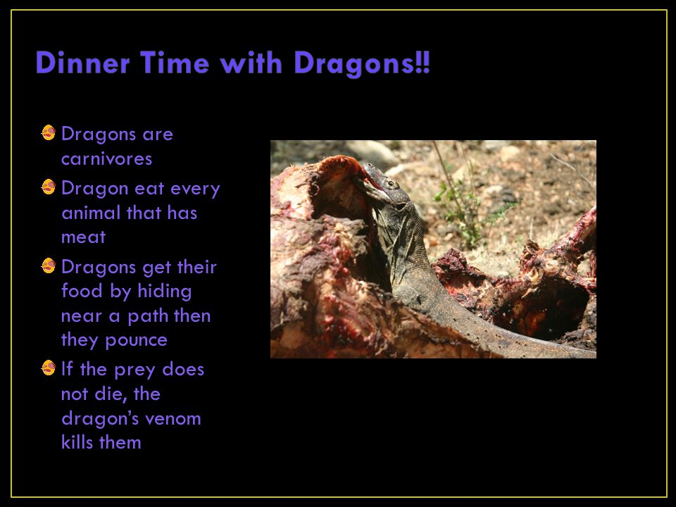 Dinner Time with Dragons!!