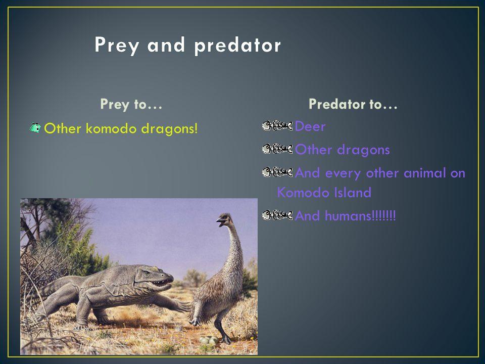 Prey and predator Prey to… Predator to… Other komodo dragons! Deer