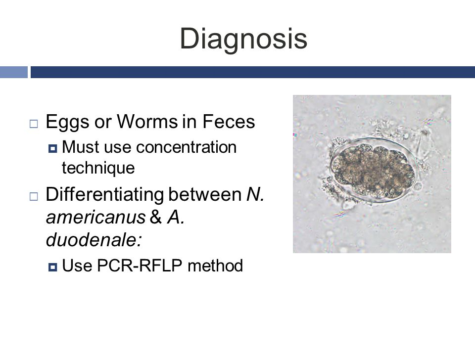 Diagnosis Eggs or Worms in Feces