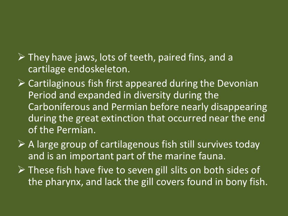 They have jaws, lots of teeth, paired fins, and a cartilage endoskeleton.