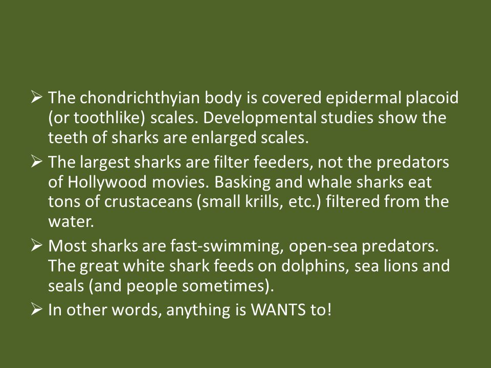 The chondrichthyian body is covered epidermal placoid (or toothlike) scales. Developmental studies show the teeth of sharks are enlarged scales.