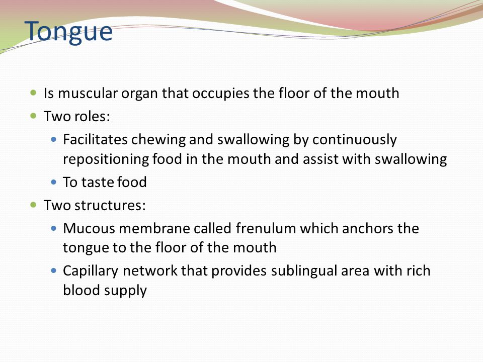 Tongue Is muscular organ that occupies the floor of the mouth