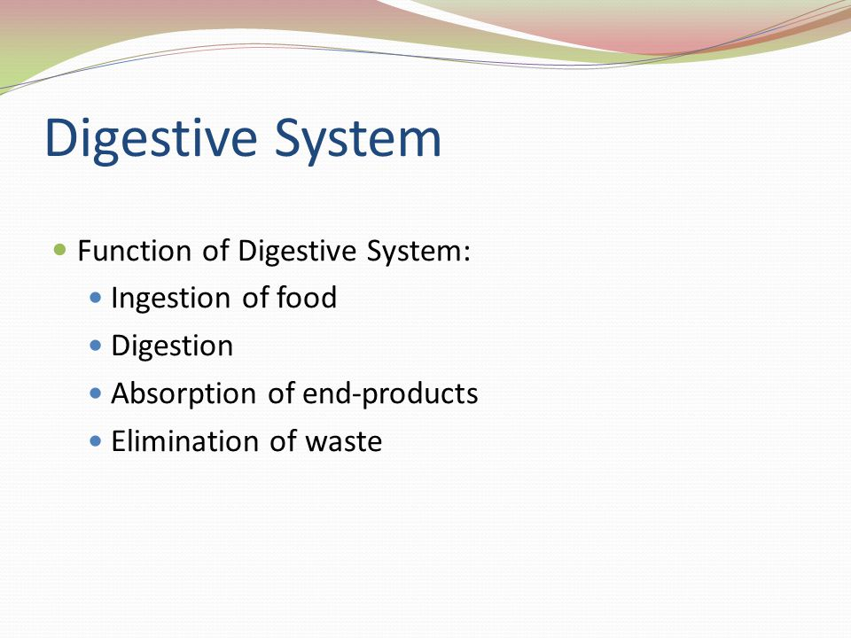 Digestive System Function of Digestive System: Ingestion of food