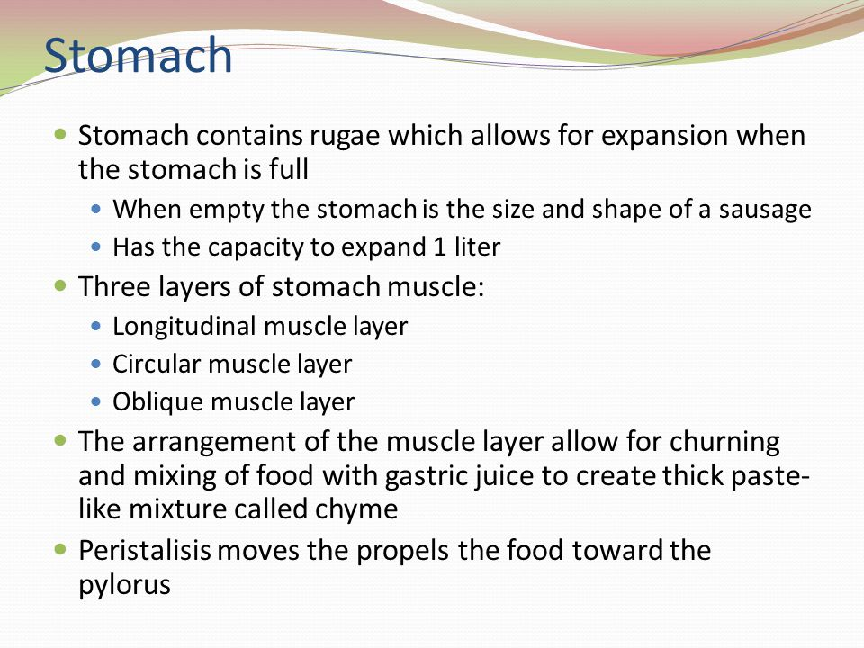 Stomach Stomach contains rugae which allows for expansion when the stomach is full. When empty the stomach is the size and shape of a sausage.