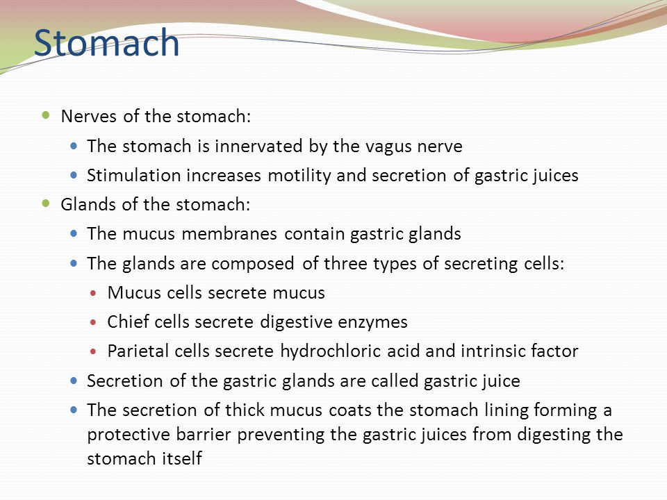 Stomach Nerves of the stomach: