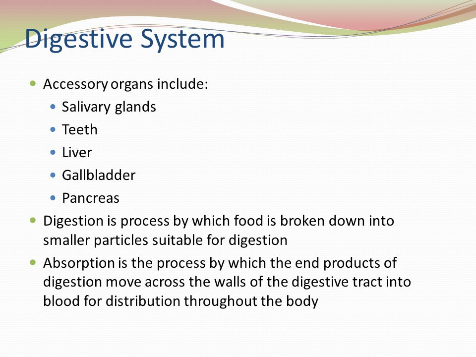 Digestive System Accessory organs include: Salivary glands Teeth Liver