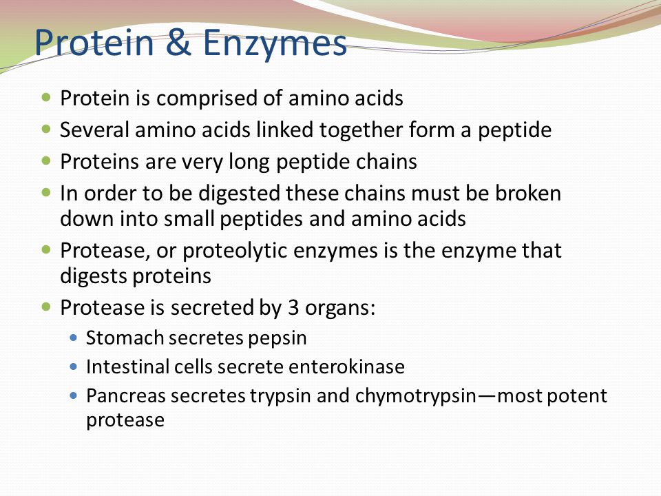 Protein & Enzymes Protein is comprised of amino acids