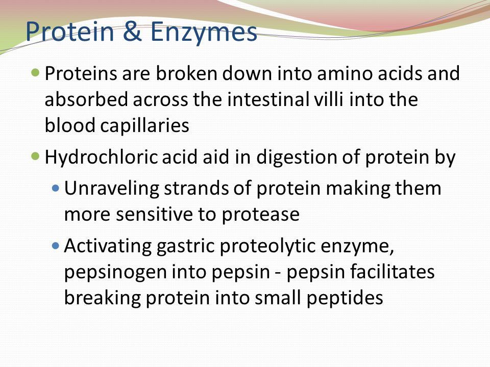 Protein & Enzymes Proteins are broken down into amino acids and absorbed across the intestinal villi into the blood capillaries.