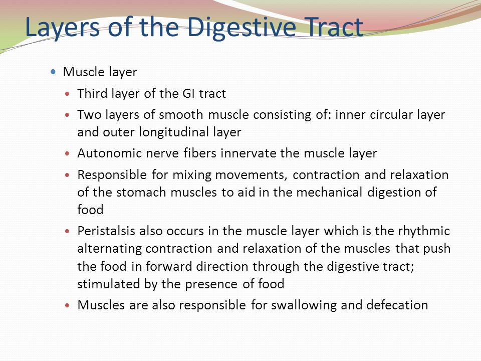 Layers of the Digestive Tract