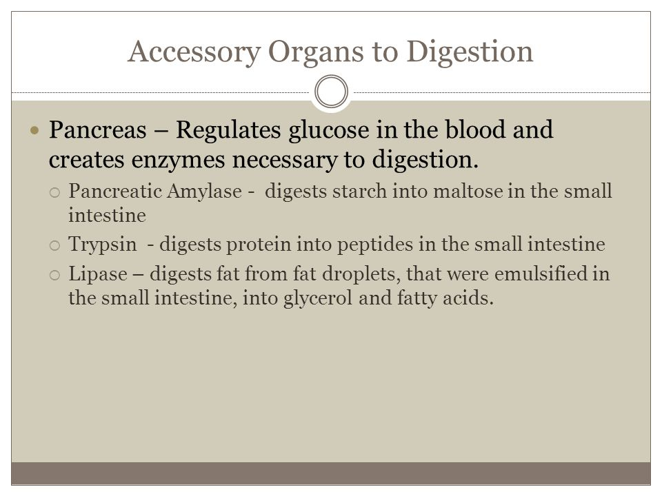 Accessory Organs to Digestion