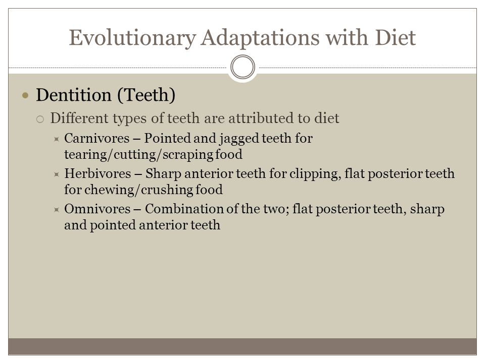 Evolutionary Adaptations with Diet